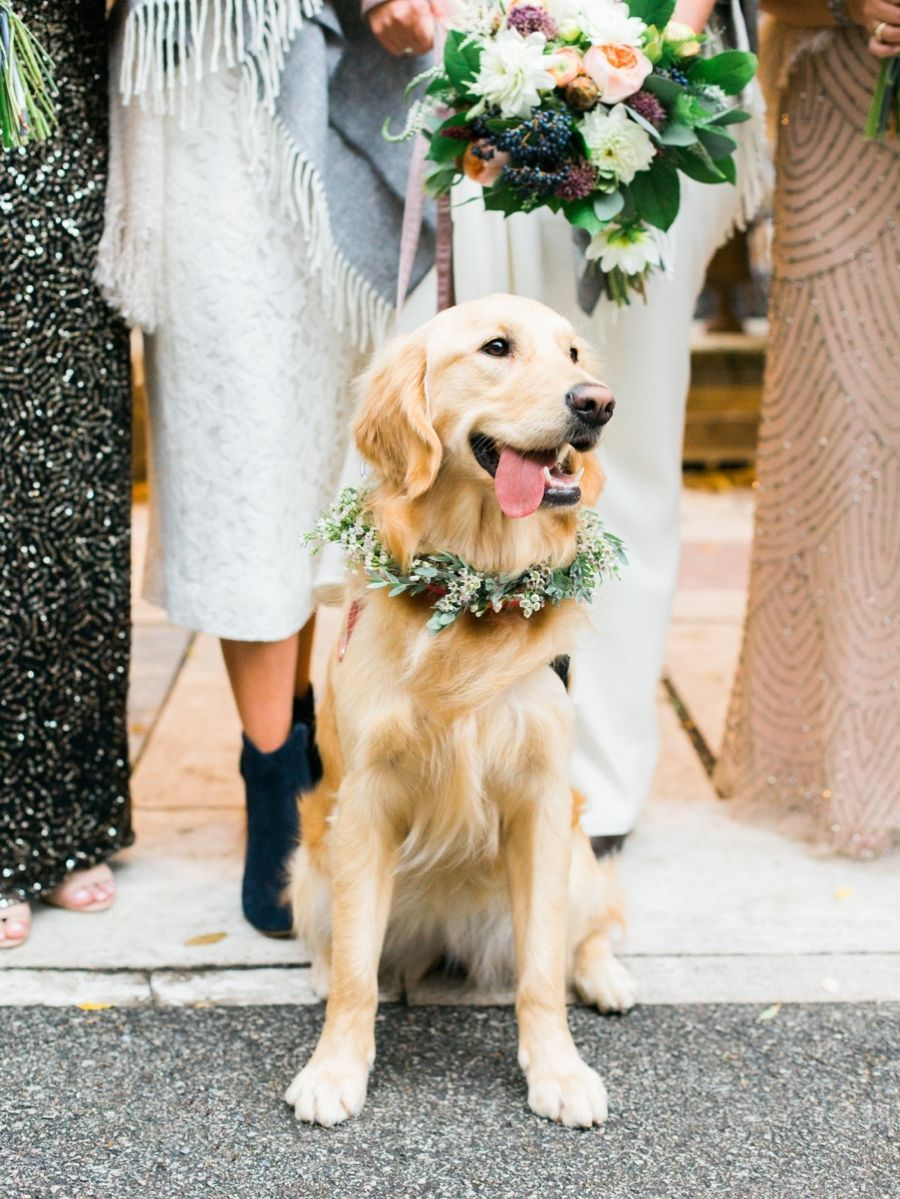 Things to Consider While Purchasing a Dog Flower Collar